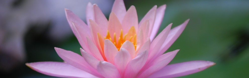Waterlily Photography